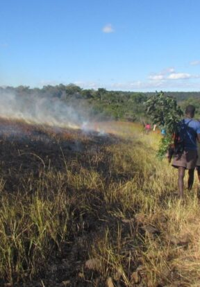 Creating burnt firebreaks to protect the forest.
