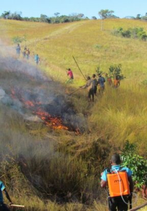 Creating burnt firebreaks to protect the forest