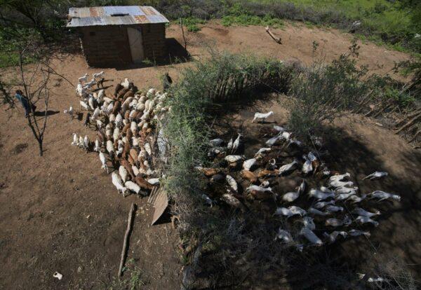 livestock enter a living wall