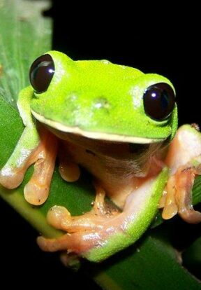 Sierra Caral in Guatemala is home to numerous endemic yet threatened amphibians