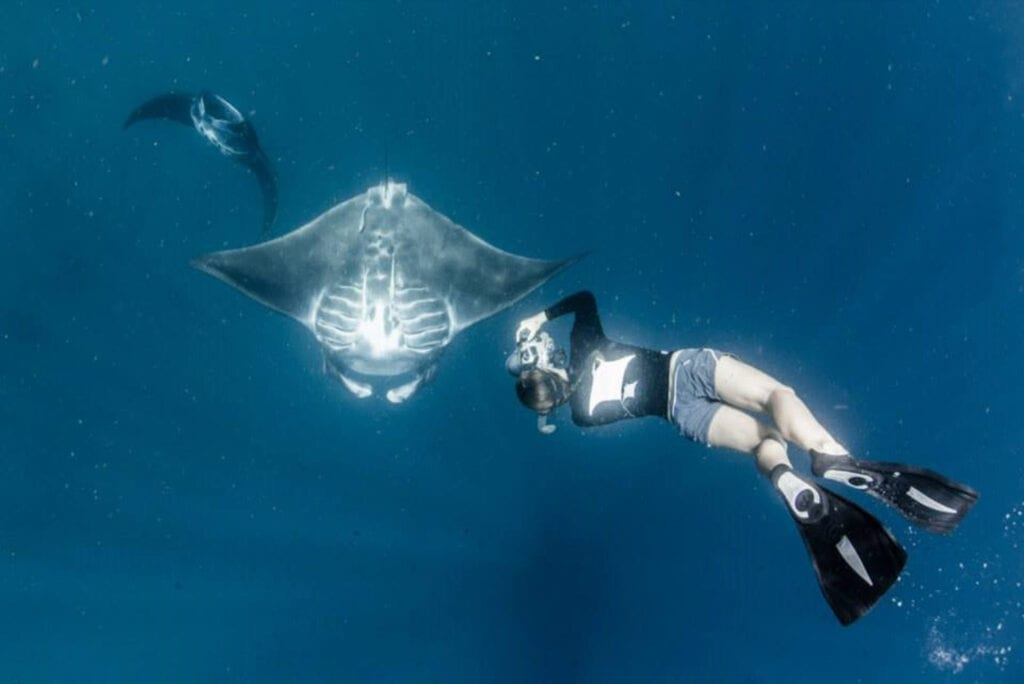 Manta Trust Manta Rays Sarah Lewis IDing black reef manta rays, Raja Ampat, Indonesia