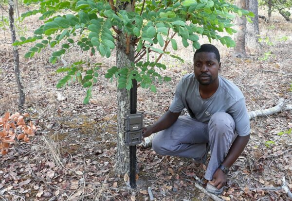 Evans Nsende setting up camera traps in the field in Zambia