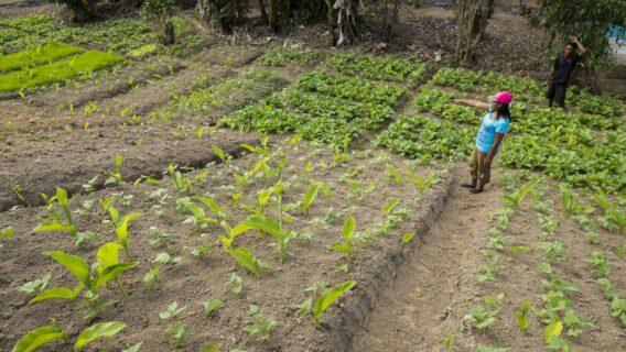 Livihoods programme in Madagascar, Association Fanamby